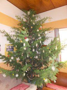 Der geschmückte Weihnachtsbaum in unserem Aufenthaltsraum
